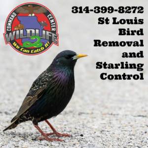 St Louis Pest Bird Removal
